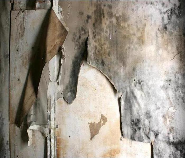 Mold Remediation Mold Damage Remediation Services in The Spokane Valley
