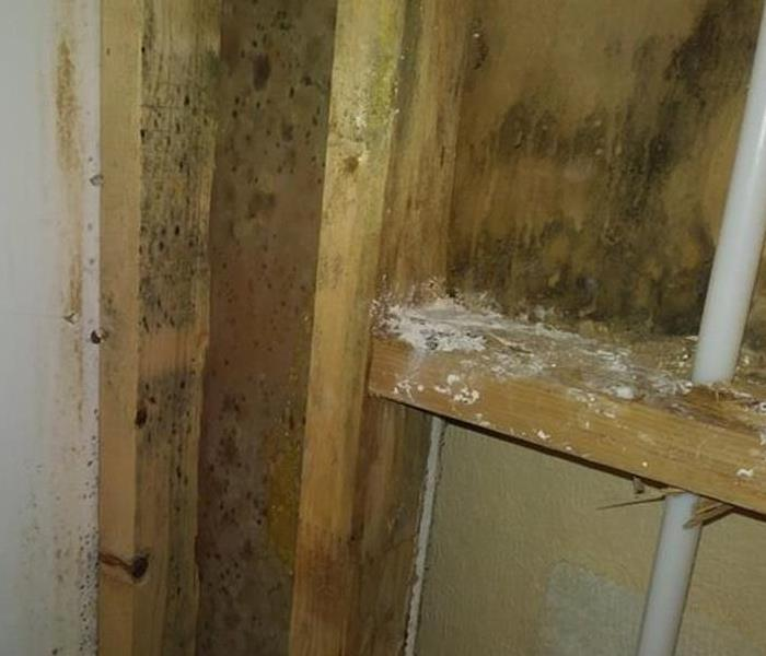 Commercial Tips to prevent mold growth in you local business in Spokane